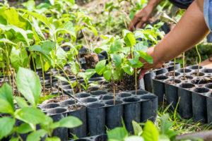Onetreeplanted planting seedlings, sustainability